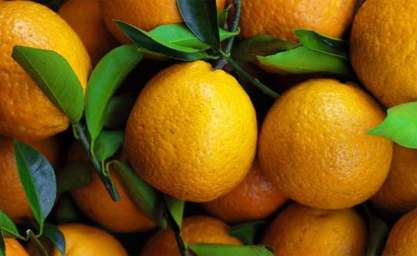 长叶香橙果实