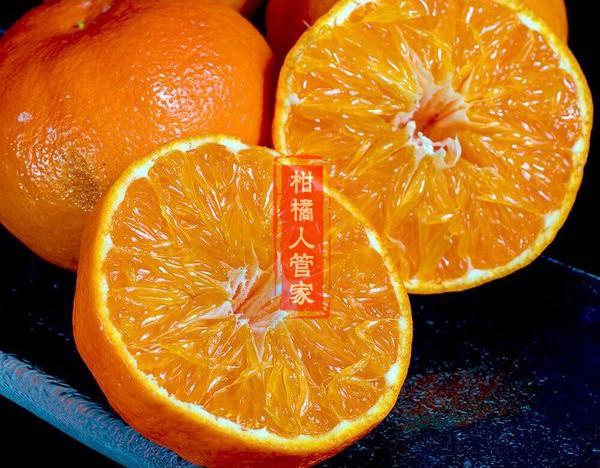 明日见柑橘图片