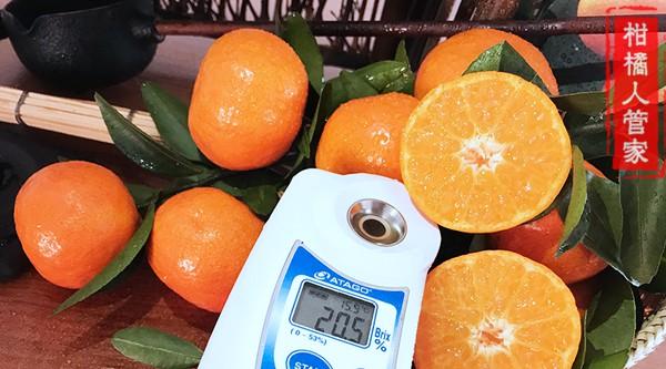 金葵沙糖桔糖度测试图片