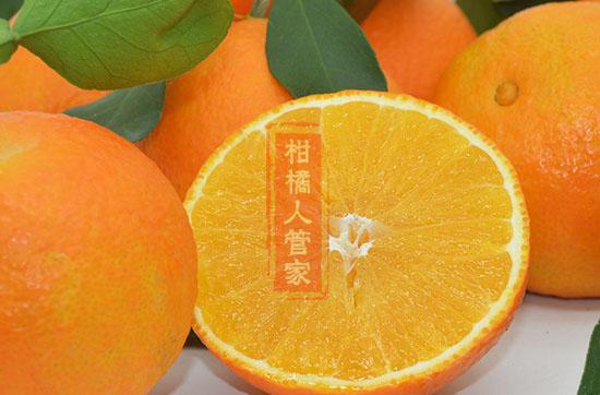 最贵柑桔品种