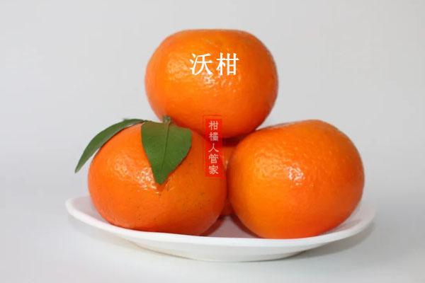 长叶香橙和沃柑哪种好,谁更有前景