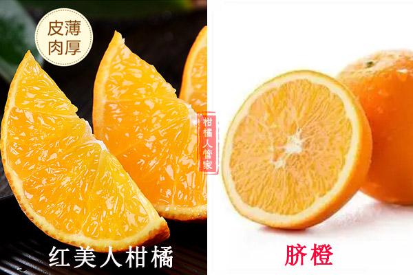 脐橙和红美人哪个市场前景大