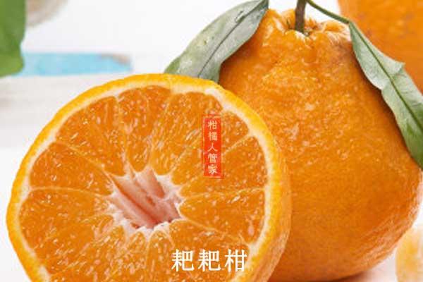 四川柑橘什么品种最好