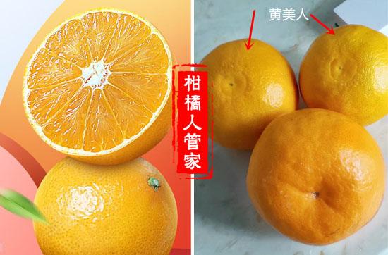 黄美人柑橘种植前景怎么样